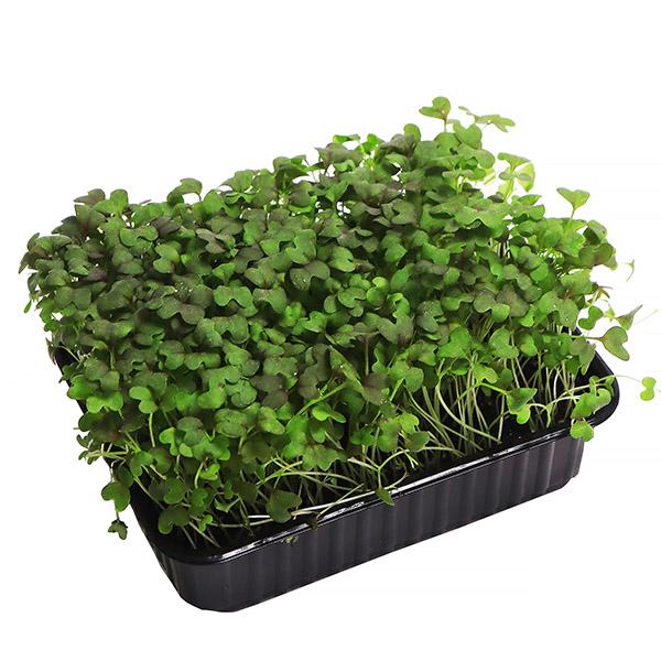 Микрозелень Купить В Москве В Интернет Магазине